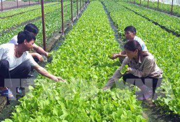 Kiến thức sinh viên được cung cấp khi chọn học ngành nông nghiệp 1